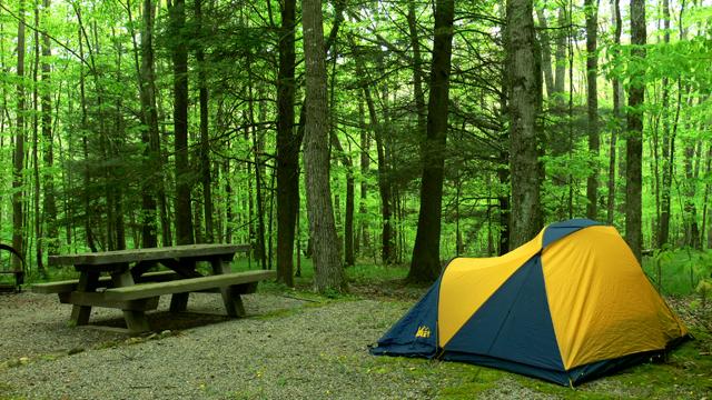 Campsite Mt Rogers
