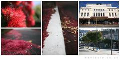 The real red carpet (manipula) Tags: flowers trees newzealand cinema composite wellington lordoftherings premiere needles weta peterjackson redcarpet pohutukawa courtenayplace theembassy manipula davesanderson nzschristmastrees