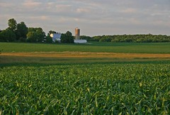 farmland proposed for development outside Frederick, MD (courtesy of Kai Hagen)