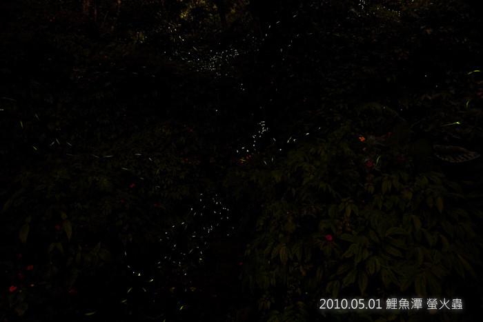 20100501_鯉魚潭螢火蟲_2808