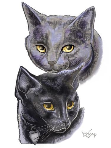 Cheryl Cats