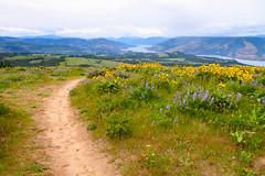 Tom McCall Preserve-7 (erickPDX) Tags: oregon cloudy may wildflowers hoodriver columbiarivergorge rowena mosier tommccallpreserve