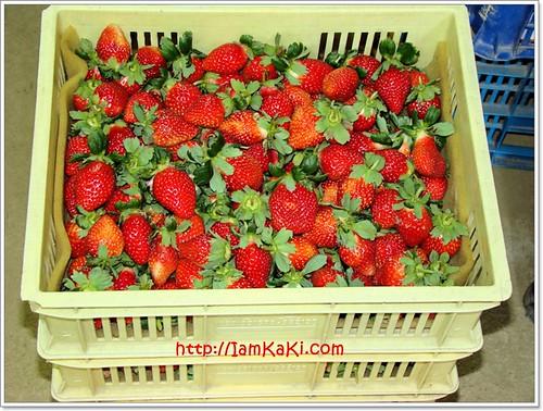 strawberry06