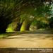 Bamboo-Shaded Road