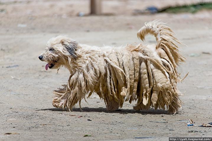 Bolivian Animals
