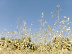 Verano (Xemical) Tags: blue summer sky naturaleza planta