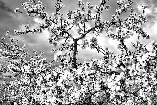 Primavera en la Huerta 04