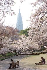 Tokyo View - Shinjuku (cocoip) Tags: japan eos tokyo shinjuku  cherryblossom  sakura 5d    ef2470mmf28lusm shinjukugyoen markii ef2470mm canoneos5dmarkii 5dmarkii 5d2 5dii 5dmark2 eos5dmarkii