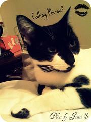 "Moo ""Calling me-ow?"" (CuteInk) Tags: cute love cat kitten kitty moo lovely cuteness picnik kawai catonbed"