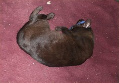 Al and his catnip sock (cox-on-the-box - art, clay, cats, veg) Tags: catnipaddicts