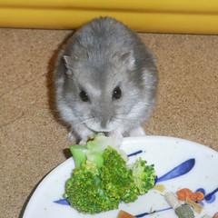 ブロッコリーを食べるコー太