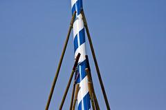 Maibaumaufstellen (raumoberbayern) Tags: blue white tree bayern bavaria may mai blau weiss robbbilder maibaum stangen aufstellen