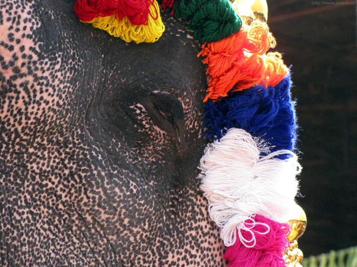 thrissur pooram - Silent participant of Pooram
