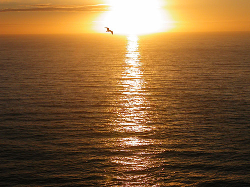 Atardecer y gaviota. Sunset and seagull.