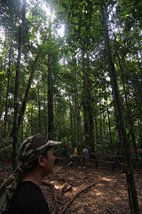 National Park (izamree) Tags: park rescue forest team walk national jungle malaysia guide canopy taman pahang negara jabatan kanopi perhilitan