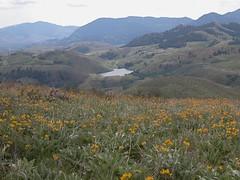Moccasin Lake 2.JPG