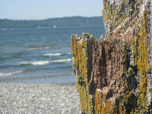 Rotten Pier on Beach