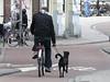 in bici col cane