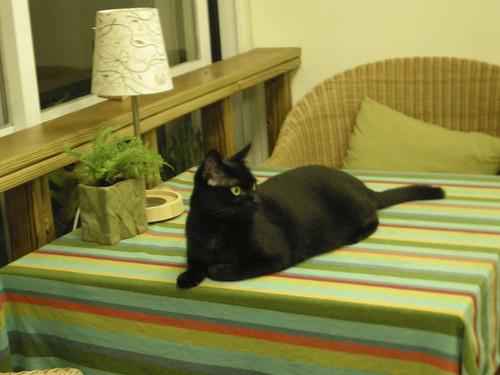 Black cat at Smallidea