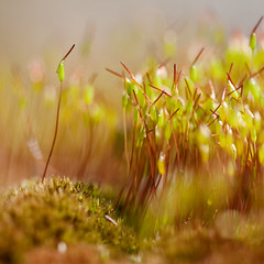 Stand out from the crowd! (Alina Uritskaya) Tags: macro canon moss russia 10028 rubyblue artofimages bestcapturesaoi elitegalleryaoi alinauritskaya