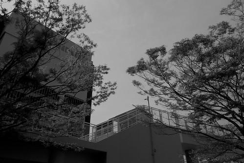 niigata monochrome 27