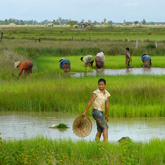 Working in the wet rice fields of Laos (B℮n) Tags: poverty topf50 lowlands farmer agriculture topf100 hardwork topf200 weeding paddyfields harvesting paceoflife donkhong southernlaos 100faves 50faves dayworkers 200faves ricefarming bamboohat abigfave anawesomeshot colorphotoaward womanfarmer ddd6 academiahispanoparlantedeautodidactas laopeople dolledokadonderdag laoscountryside chinesebamboohat hardworkingfarmer transplantingofrice womeninthepaddyfields updatecollection laowomenatwork 4000islandsinthemekong preparingbunds majorwetricefields farmingwomeninlaoshaveasubstantialrole ricecutivation islandinthemekong greenricefields womenworkinginthepaddyfields loapeople lovelylaoladyworkinginthepaddyfields