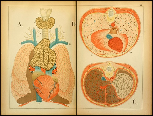 An atlas of Anatomy (FF Miller, 1879) b