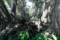 baudchon-baluchon-costa-rica-cahuita-49