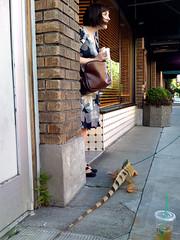 Iguana 6 (eyepiphany) Tags: fashion stripes streetphotography horns evolution lizard trends iguana mansbestfriend wtf portlandoregon shocked suprise stumptown streetfashion walkingthedog iguanaiguana surpise greeniguana davidicke exoticpets streetfashionphotography portlandfashion nauticalstripes fashionunleashed wearswaldo bretonstripes howtoaccesorize portlandcasual portlandcazl portlandfashion365daysayear hugegreeniguana manandiguana reptiletheory hawthonreboulebard printdressandleathers killeriguana iguanainthehood printdressandblackflats girlandlizard