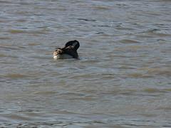 P1010606 (MeRyan) Tags: public birds rivers