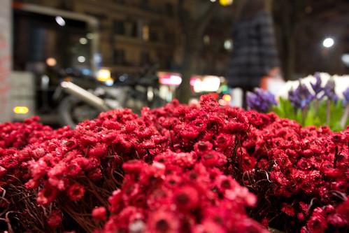[15/365] Street flowers