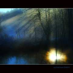 upside down...(just a reflection) (MyOakForest) Tags: winter sun mist fog river rays fluss sonne sonnenstrahlen refections dunst spiegelungen mywinners myoakforest