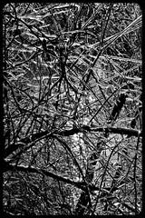 IceStorm09-24 (chuck.heeke) Tags: kentucky icestorm louisville january2009