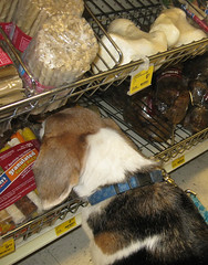 And I'll take... this one (Lisas Lounge) Tags: dog beagle treats hound feb 2009 petsmart elway