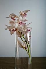 Anna Gilmore 3 (T. Scott Carlisle) Tags: flowers florist cantina tsc tphotographic annagilmore tphotographiccom tscarlisle tscottcarlisle