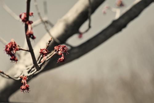 Budding Branches 7.