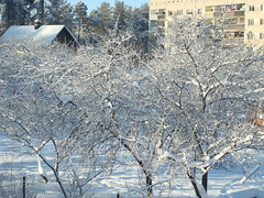 I have a feeling, I didn't upload it yet (Ievinya) Tags: winter snow garden snowy snowytrees wintermorning appletrees sniegs plumtrees ziema drzs sniegots plmes sniegotsrts sniegotikoki beles snowywintermorning rtsziem
