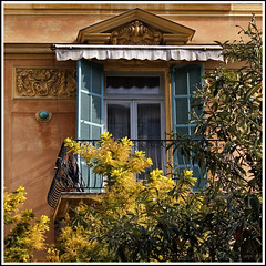 Open Window with Mimosa in Nice, French Riviera (Rita Crane Photography) Tags: france window architecture nice cotedazur balcony stock shutters mimosa monalisasmile southoffrance fenetre morningsun stockphoto frenchriviera architecturaldetails 500x500 belleepoque imagepoetry oldtownnice wwwritacranestudiocom mediterraneancolors oraclex thedantecircle visionquality nicevielleville obramaestra leuropepittoresque