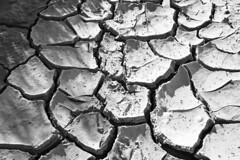 Drought (Bert Kaufmann) Tags: blackandwhite bw white black zwartwit dry drought zwart wit barst droogte aplusphoto gebarsten