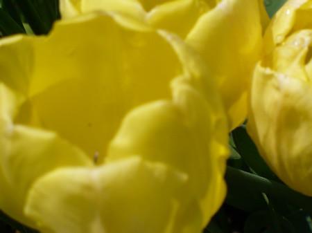 gelb.jpg