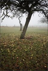 Newton au pr (Rgis (R208)) Tags: tree apple arbre pomme