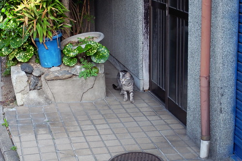 Today's Cat@20090507
