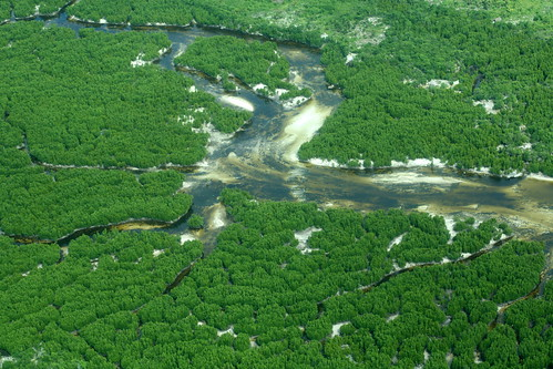 aerial North coast mangroves