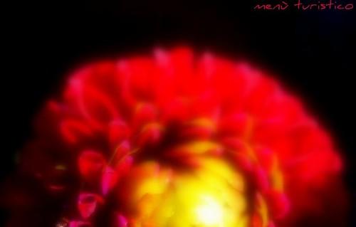 fiori giugno 018