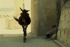 - (croccodilla) Tags: bali el marocco medina mercato viaggio fes morokko