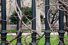 Nature Entwined in City (wenzday01) Tags: greatbritain travel england tree london church garden nikon iron europe cathedral unitedkingdom branches stpauls stpaul nikkor stpaulscathedral d90 twines nikond90 18105mmf3556gedafsvrdx