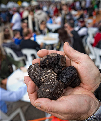 111_MTF_Truffle in hand high res (2)-1.jpg