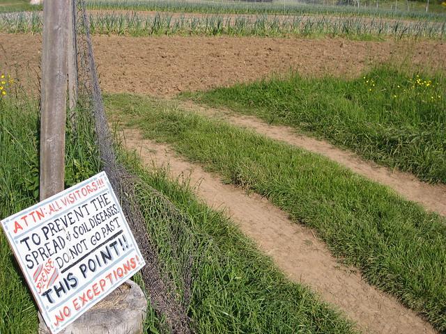 Soil Disease Alert!