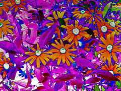 Flower Power (dlco4) Tags: flowers abstract colors colorful searchthebest artistic goldstar iloveit awesomeshot blueribbonwinner cherryontop supershot bej irresitablebeauty citrit goldsealofquality goldstaraward dragongold top20vivid rubyphotographer thenoblespirit photographerparadise digitalartfx flickrsmasterpieces abundantflowers