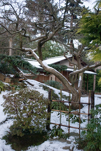 Les jardins d'Albert Kahn XII
